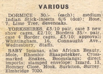Cage Birds 3 December 1953